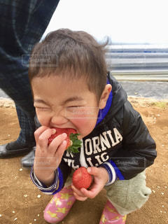 いくつかの料理を食べている男の子の写真・画像素材[1774807]