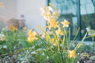 近くの花のアップの写真・画像素材[1832113]
