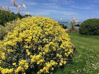 花,綺麗,フラワー,黄色,鮮やか,ニュージーランド,yellow,キレイ
