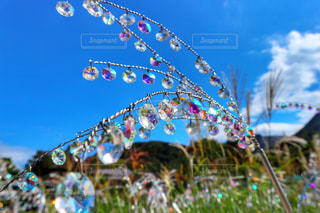 風景,空,秋,雲,ススキ,秋空,ガラスの森美術館,陽ざし,ガラスのススキ