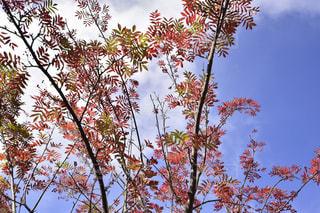 風景,空,秋,青空,景色,旅行,青い,一眼レフ,秋空