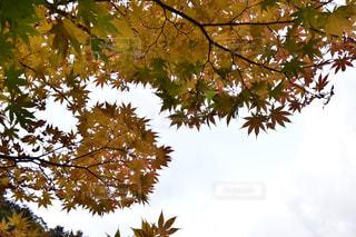 空,秋,紅葉,もみじ,景色,秋空,竜頭ノ滝