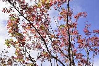 風景,秋,紅葉,森林,もみじ,景色,樹木,旅行,秋空,カエデ