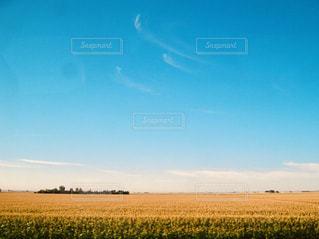 自然,空,秋,屋外,青,田舎,美しい,旅,トウモロコシ畑,秋空