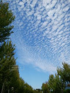 空,秋,屋外,青空,樹木,うろこ雲,街路樹,秋空,いわし雲
