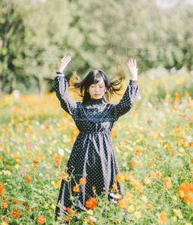 フィールド内の黄色の花の写真・画像素材[1611932]