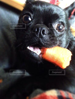 犬の写真・画像素材[1496295]
