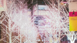 冬,夜,夜景,木,白,街,イルミネーション,Snapmart,winter,LED,街路樹,グランフロント大阪,うめきた広場,シャンパンゴールド