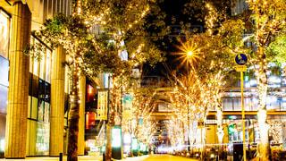 建物,夜,夜景,ビル,屋外,街,樹木,イルミネーション,都会,道,Snapmart,通り,街路樹,アンバサダー,グランフロント大阪,シャンパンゴールド
