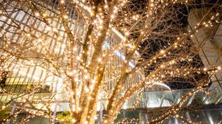 夜,夜景,屋外,街,樹木,イルミネーション,都会,照明,Snapmart,街路樹,景観,アンバサダー,グランフロント大阪,シャンパンゴールド
