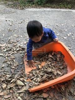秋,屋外,赤ちゃん,掃除