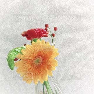 花の写真・画像素材[1541150]