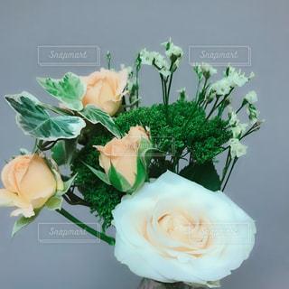 花の写真・画像素材[1571059]