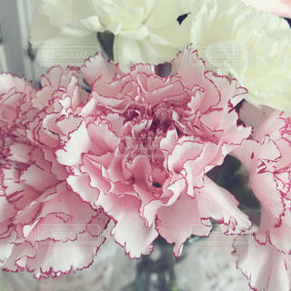 花の写真・画像素材[1571065]