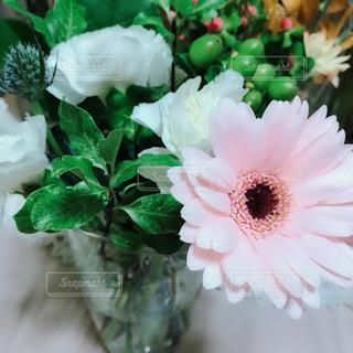 花の写真・画像素材[1571081]