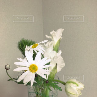 花の写真・画像素材[1571088]