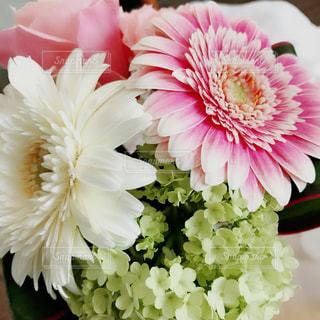 花の写真・画像素材[1571093]