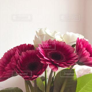 花の写真・画像素材[1571094]