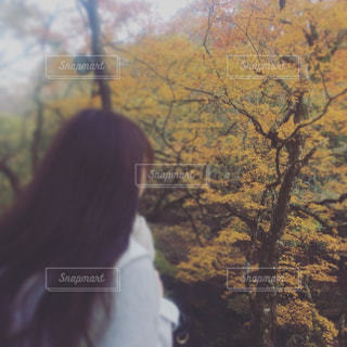 紅葉,観光地,箱根,ガラスの森美術館