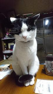 テーブルに座っている黒と白の猫の写真・画像素材[1621546]