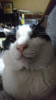 近くにカメラを見て猫のアップの写真・画像素材[1621568]