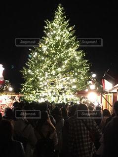 白,クリスマスツリー,ホワイト