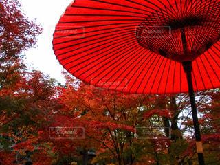 大きな赤い傘の写真・画像素材[1611534]