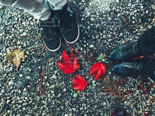 鮮やかな落ち葉の写真・画像素材[1614443]