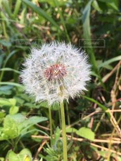 庭の植物の写真・画像素材[2285209]