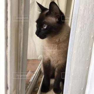 木製のドアの上に座っている猫の写真・画像素材[2329322]