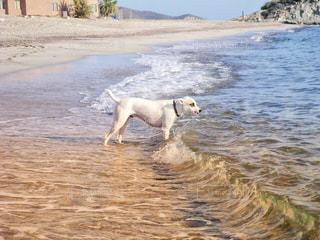 水域の隣に立っている犬の写真・画像素材[2330882]