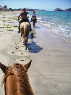 海辺で乗馬の写真・画像素材[2348508]