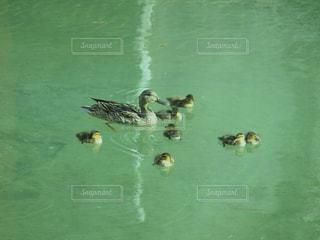 親子で水中散歩の写真・画像素材[2365448]