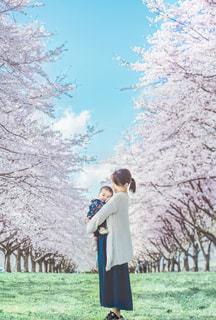 桜と親子の写真・画像素材[2263748]