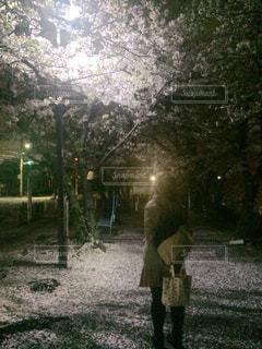 桜をみつめて…の写真・画像素材[1571156]