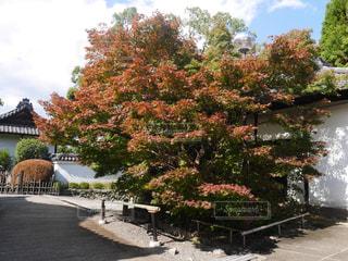 秋,紅葉,京都,東山,青蓮院跡