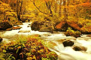 自然,秋,紅葉,もみじ,レジャー,奥入瀬,奥入瀬渓流