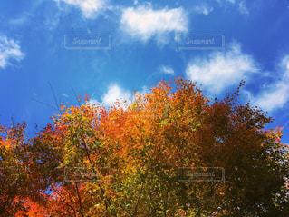 秋,紅葉,もみじ,オレンジ色,秋空