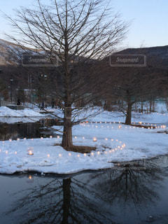 冬,木,雪,キャンドル,山中湖