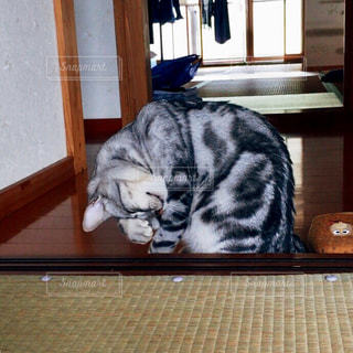 猫,綺麗,室内,ねこ,床,掃除,清潔,顔の掃除