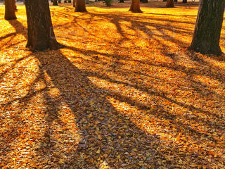 落ち葉の絨毯の写真・画像素材[2088669]