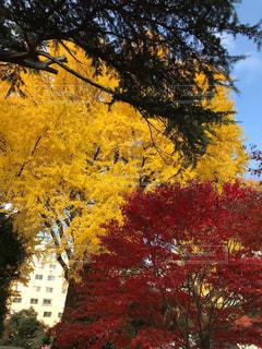 秋,紅葉,屋外,樹木,秋空,新宿御苑