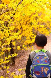 風景,花,春,屋外,黄色,景色,樹木,お花見,イエロー,草木