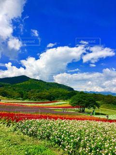 夏の終わりの花畑の写真・画像素材[1501715]