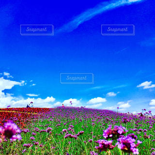 Flower gardenの写真・画像素材[1552295]