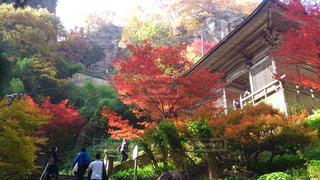 秋,紅葉,晴天,山寺,山形