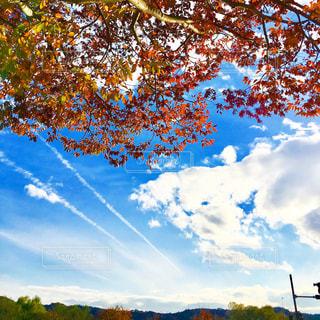 飛行機雲と紅葉🍁の写真・画像素材[1614652]