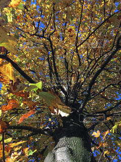落ち葉と木と空と🍁🌳🌤の写真・画像素材[1614666]