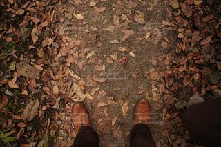 秋色の写真・画像素材[1593214]