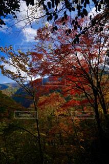 空,秋,紅葉,屋外,観光地,樹木,熊本,モミジ,秋色,五家荘